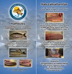 Halfilézés - halszálkátlanítás prospektus